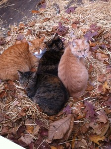Simba (far left), Scout (bottom), Flash (sandwisched between Simba and Mommy Cat) and Mommy Cat (far right)