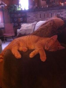 Sleeping Patricia