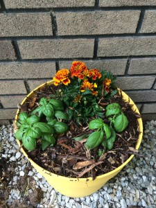 Finsihed product... marigolds and basil with a little mulch to help prevent soil from splashing over in heavy rain