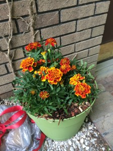 Pot of marigolds by our front door... makes a barrier mosquitoes don't want to pass!