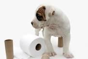 Potty Training Your New Dog