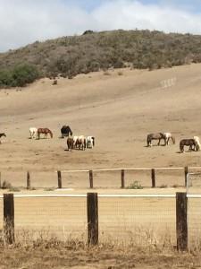 HORSES! I miss my horses!
