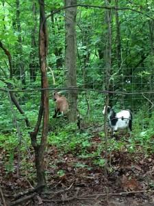 Teaching my son to climb fences!