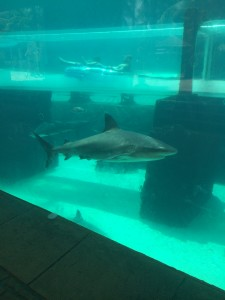Shark attack... is the Jaws theme song playing in your head? Our ride tube went through this tank.